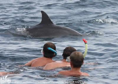 dolphin enqounter, swimming with dolphins